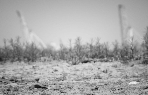Desert and cranes