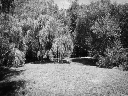 Bosky: the willows of Willowbank