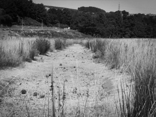 Ley line reeds