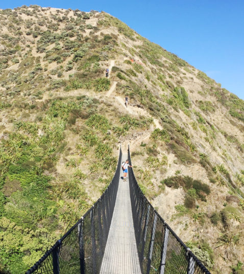 Swingbridge and walkers along the Paekakariki Escarpment track.